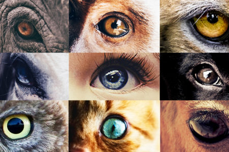 Eyes of Animals and Child
